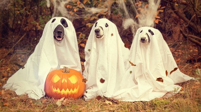 three dogs in costumes, Image by nancy sticke from Pixabay